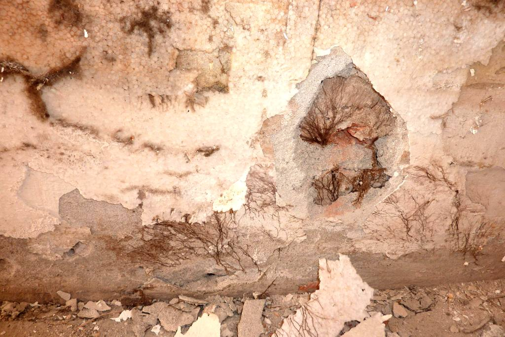 Wand mit teils abgebrochenem Putz, braune Flechten.